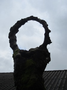 This tree looks like a hand holding a ring -